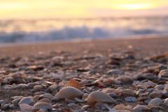 Shells on the beach Royalty Free Stock Images