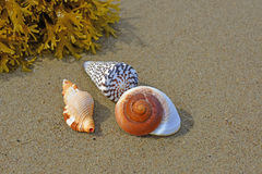 Shells on a beach Royalty Free Stock Images