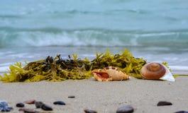 Shells on a beach Stock Photography