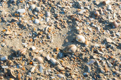 Shells on the beach from close Royalty Free Stock Images