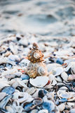 Shells on the beach. Compiled shells on the beach Stock Photos