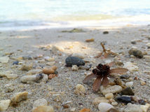 Shells on the beach. Shells, dried flowers tea on the beach Royalty Free Stock Photography