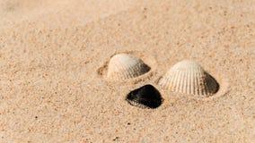 Shells on the beach Stock Photos