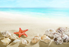 Shells on the beach Royalty Free Stock Image