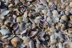 The shells on the beach Stock Images