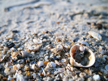 Shells on the beach. Lots of shells on the beach with blur backgound Royalty Free Stock Photos