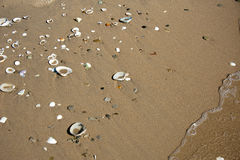 Shells on the beach Stock Photos