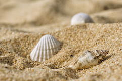 Shells on the Beach. Macro shot of shells in the sand Royalty Free Stock Image
