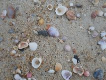 Shells on the beach. Many shells on the beach because waves of sea Stock Photo