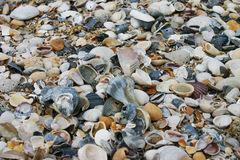 Shells royalty free stock image