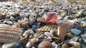 Shells on Beach Royalty Free Stock Photography