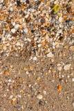 Shells on a beach Royalty Free Stock Photos