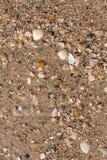 Shells on a beach Stock Photo