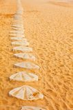 Shells on the beach road Stock Photography