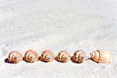 Shells on the beach in the row. Some seashells are in the sand on the beach in the row royalty free stock image