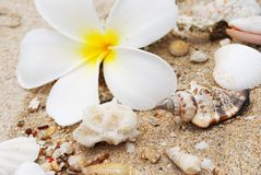 Shells in beach sand Royalty Free Stock Image
