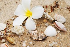 Shells in beach sand Stock Photography