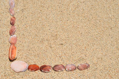 Shells on the beach Stock Images