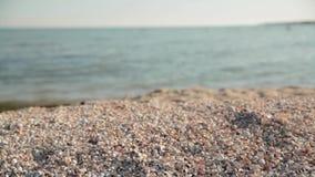Shells on the beach. Sea calm, sunny weather, sandy shore, sea shells on the sea shore, sea water, tranquil idyllic scene of a golden sunset over the sea stock footage