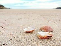 Shells at the beach Stock Photo