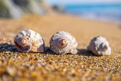 Shells on the beach. royalty free stock image