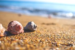 Shells on the beach. stock photography