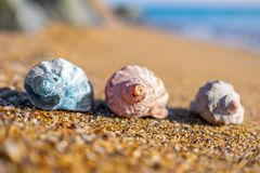 Shells on the beach. royalty free stock photos