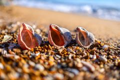 Shells on the beach. royalty free stock images