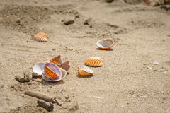 Shells on beach. Some broken and not, shells on the sand Royalty Free Stock Images
