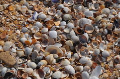 Shells on the beach in summer. Shells on the sea coast in Crimea Shelkino Royalty Free Stock Photos