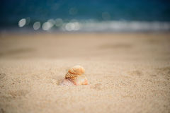 Shells on the beach, summertime. Shells on the sandy beach, summertime Stock Image