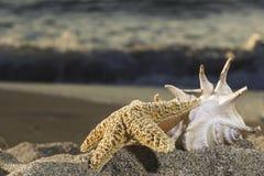 Shells on the beach Royalty Free Stock Photo