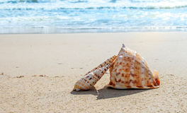 Shells on the beach. In a sunny day Stock Photo
