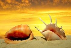 Shells on beach Royalty Free Stock Photos