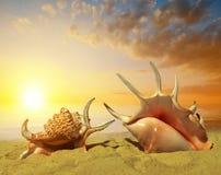 Shells on beach Stock Image