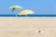 Shells on the beach. With umbrellas in the background Royalty Free Stock Photo