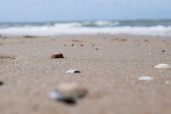 Shells on the beach Stock Photography