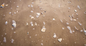 Shells on Beach Washed Over by A Wave royalty free stock photos