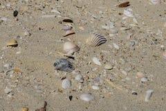 Shells bij de bodem royalty-vrije stock afbeeldingen