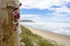 SHELLS BIJ STRAND, BRAZILIË - December 5, 2016: Joaquina Beach is a stock fotografie