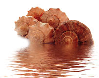 Shells from black sea Stock Photos
