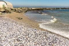 Shells on the Black Sea coast in Bulgarian Pomorie Royalty Free Stock Images