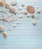 Shells Blauwe Houten Achtergrond Stock Afbeeldingen