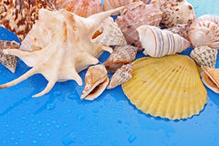 Shells on blue Stock Images