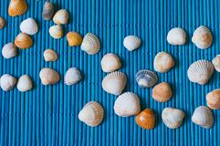 Shells on the blue bamboo mat Stock Image