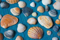 Shells on the blue bamboo mat Royalty Free Stock Photo