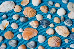 Shells on the blue bamboo mat Royalty Free Stock Images