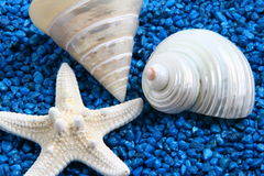 Shells on blue stones. A selection of white shells on shiny blue stones Stock Photography