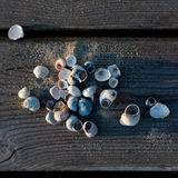 Shells on the boards of the pier Stock Photography