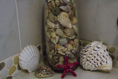 Shells in bottle Royalty Free Stock Image